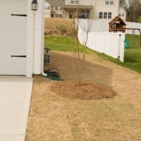 The Grass (isn't always) Greener