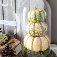 DIY Pumpkin Terrarium from a Dome Clock