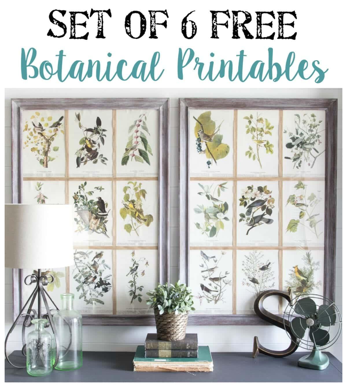 Free Botanical Printables | blesserhouse.com