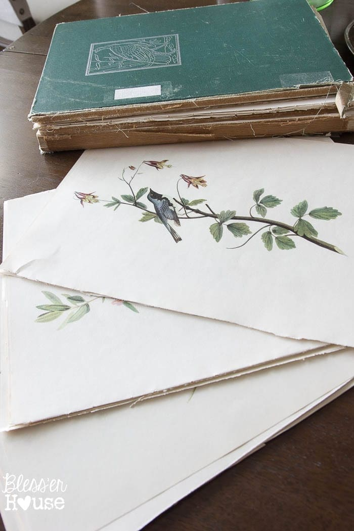 Easy Window Picture Frame and Free Botanical Printables   blesserhouse.com