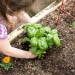 How to Plant a Thriving Vegetable Garden (6 of 10)