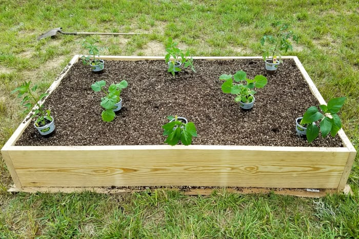 How to Plant a Thriving Vegetable Garden | blesserhouse.com - The tricks and secrets to growing a gorgeous vegetable garden even with a black thumb.