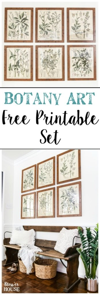photograph about Free Printable Decor called Botany Printable Artwork and a Wall Decor Putting Trick - Bless