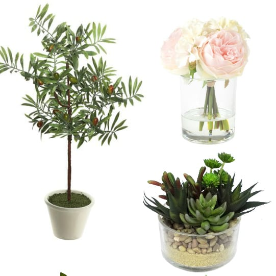 Favorite Greenery for Under $50