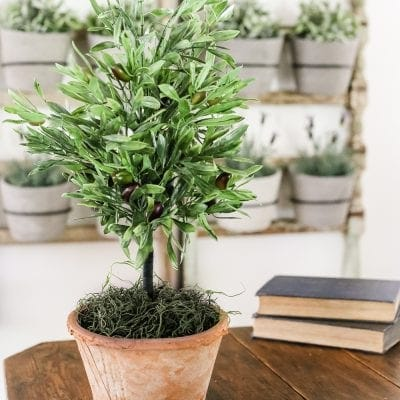 DIY Olive Topiary Tree