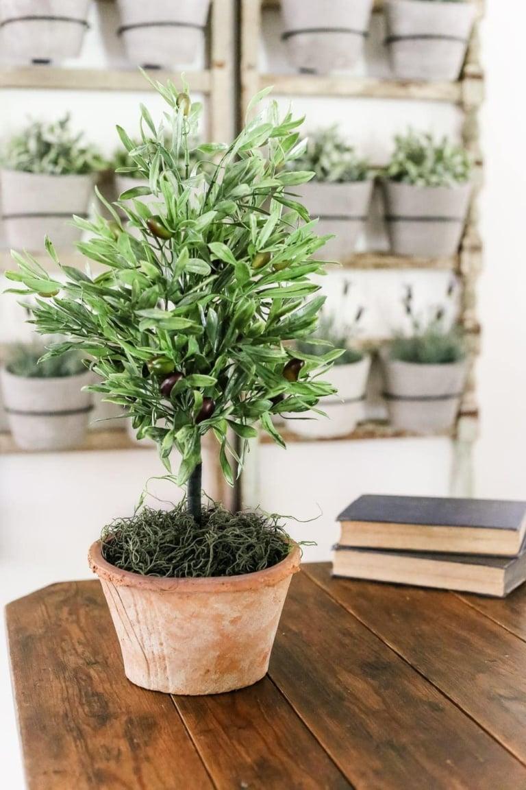 DIY Olive Topiary Tree