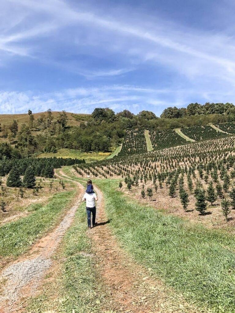 Frosty's Choose & Cut Tree Farm - Jefferson, NC