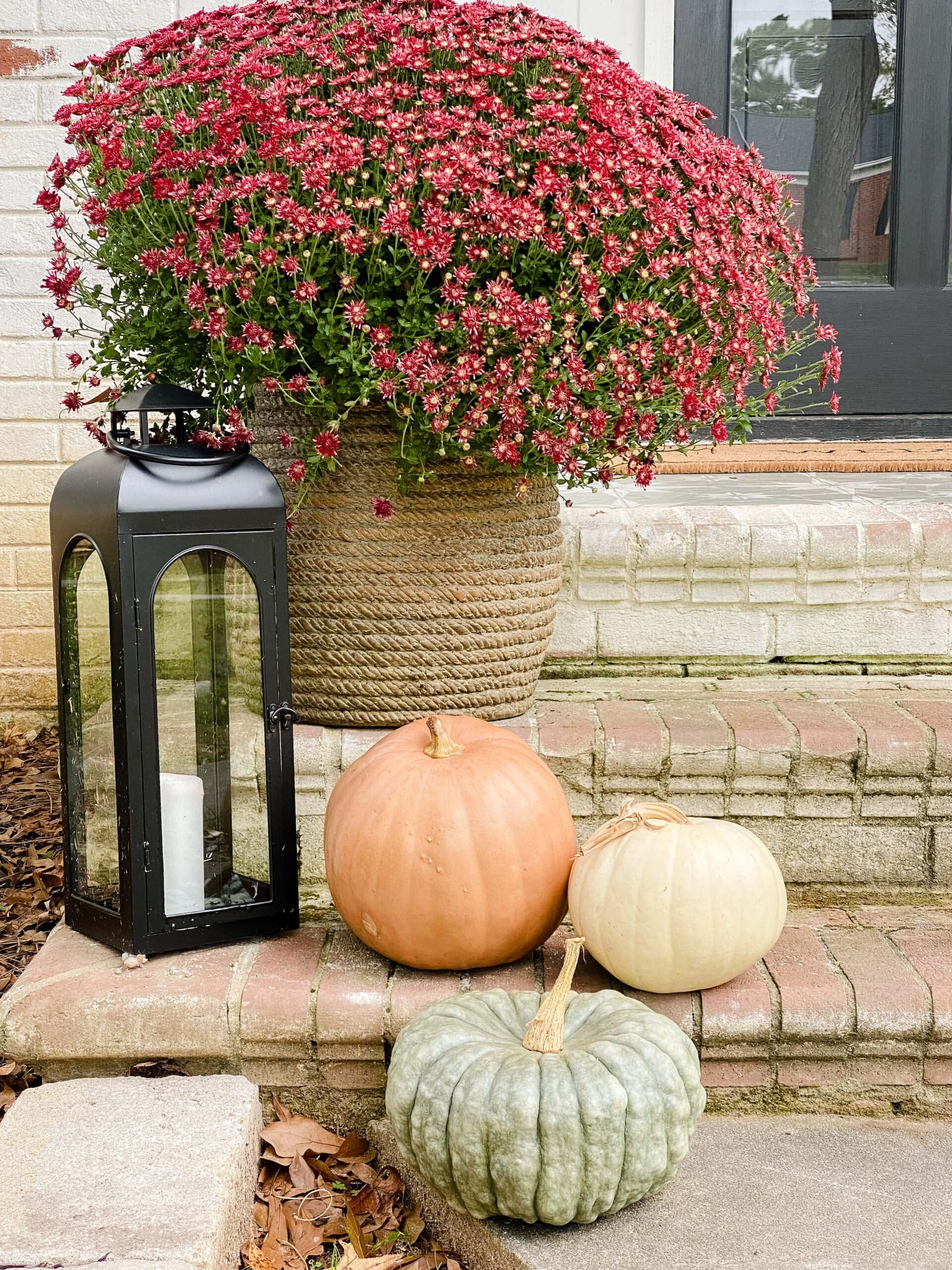 How to Keep Pumpkins from Rotting – 1 Minute Trick